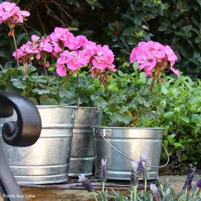 Simple Bucket Container Garden With Flowers