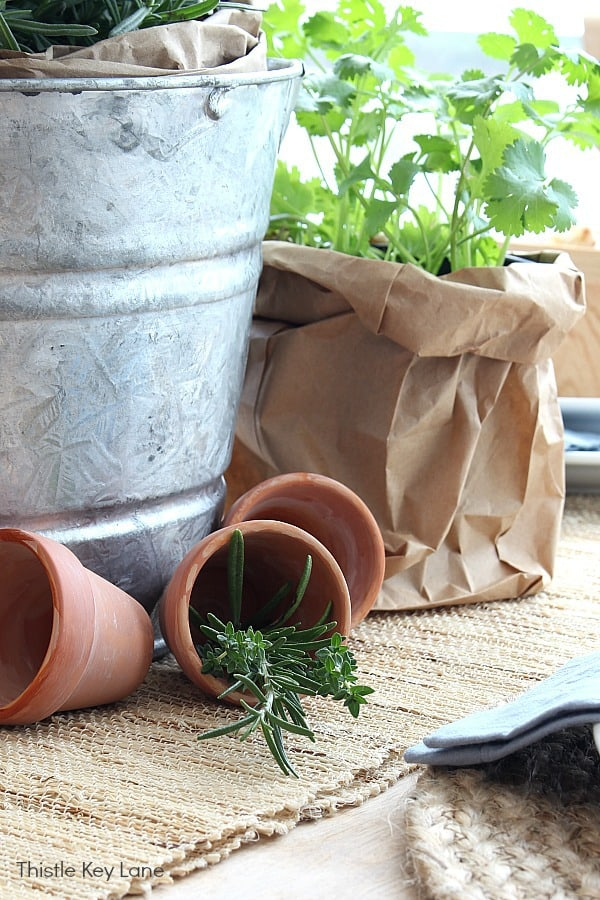 Terra-cotta pots and herbs centerpiece.