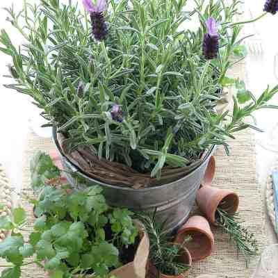 Garden Tablescape With Herbs