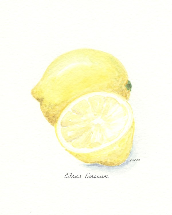 Lemon Watercolor Botanical