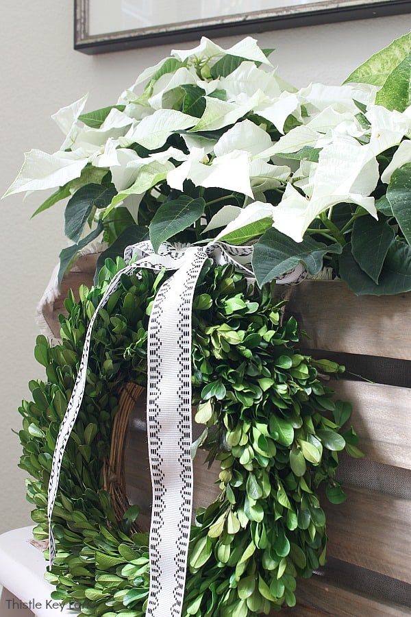 A boxwood wreath and bow decorate a crate with poinsettias.