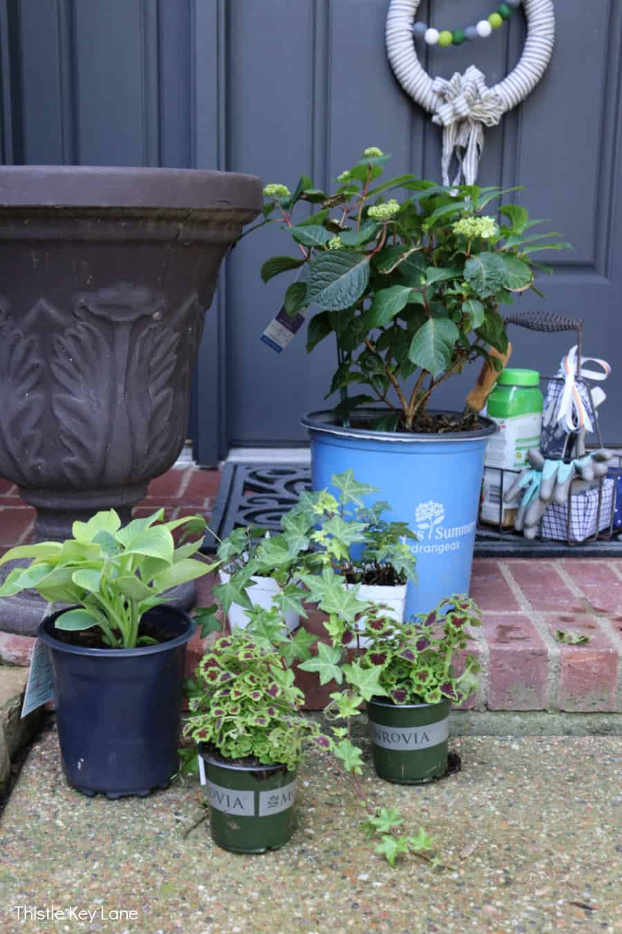Variety of plants and a urn type garden planter. Updating A Porch Planter For Spring.