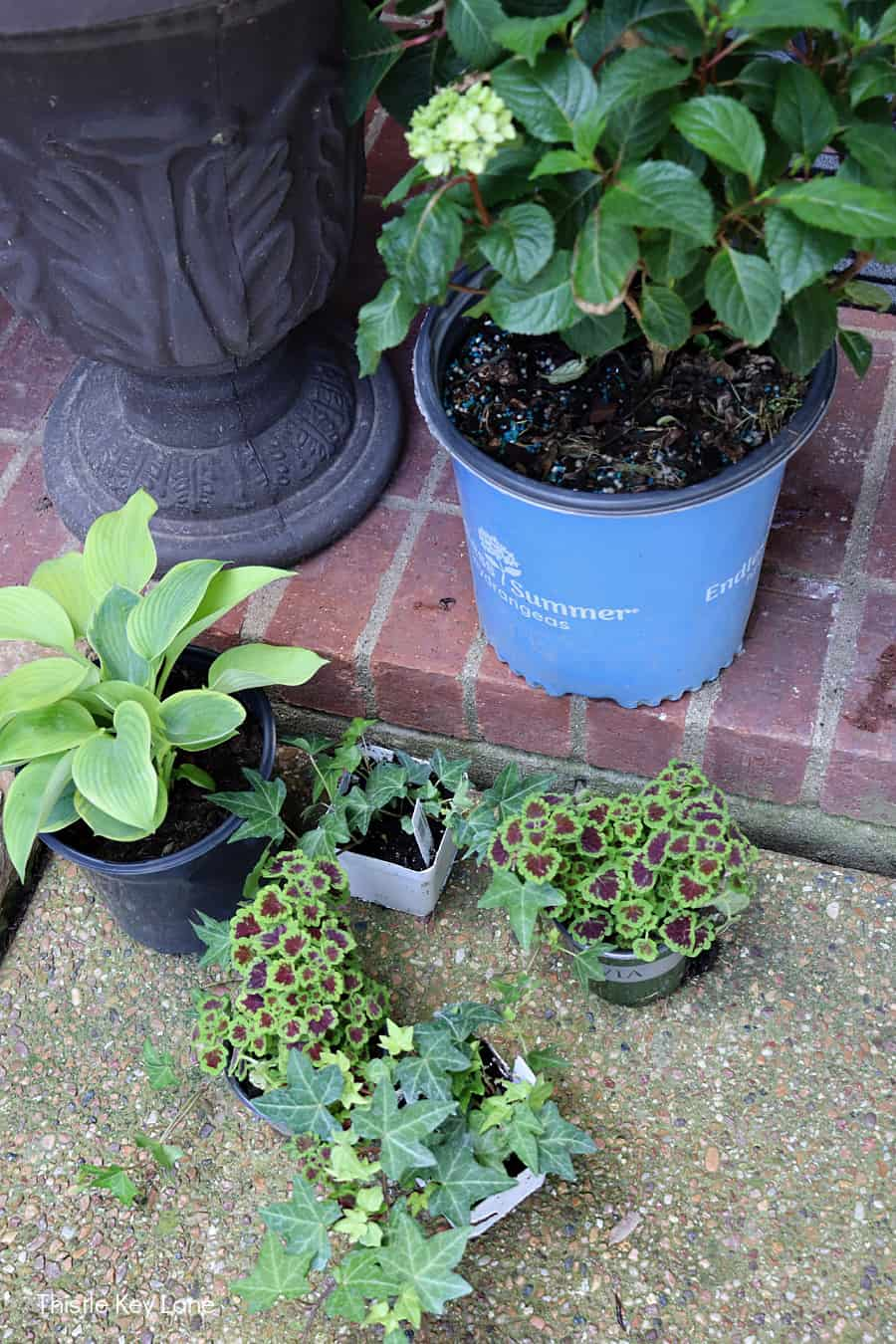 Hydrangea, hosta, coleus and ivy. Updating A Porch Planter For Spring.