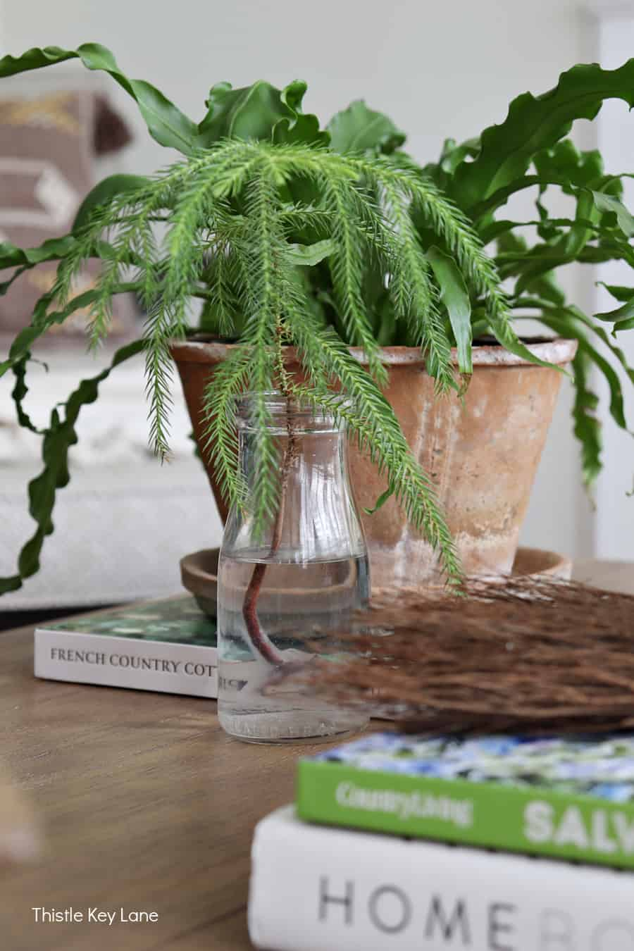 Green fern in a rustic terra cotta pot. Fall Home Tour With Neutral Colors.