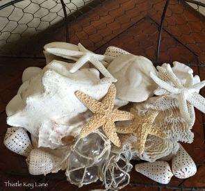 Arrangement of seashells