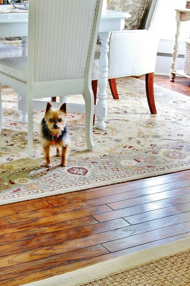 dining room and a yorkie