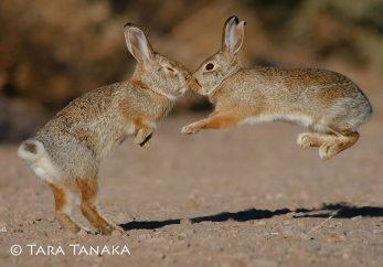 Bunnies. 4k photo