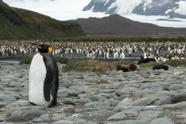 Photographing Antarctica