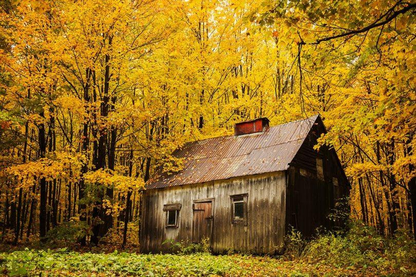 Quebec Fall