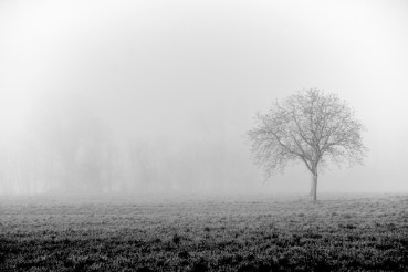 lone-tree-in-morning-fog-on-backroads-in-bw-tuscany-italy-copyright-2014-ralph-velasco