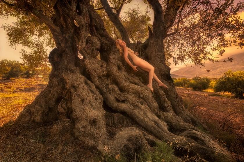 paliama-monumental-olive-treegirl-tkaweb