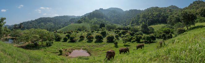 Chiang Mai - Elephant Nature Park Tour 2