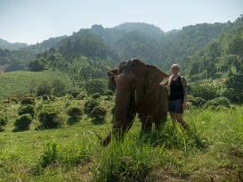 Chiang Mai - Elephant Nature Park Tour 3