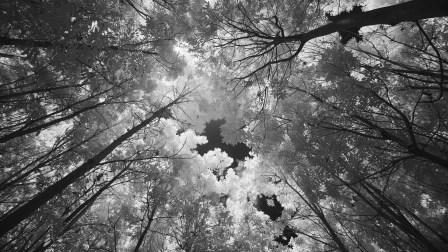 ©Troy Miller