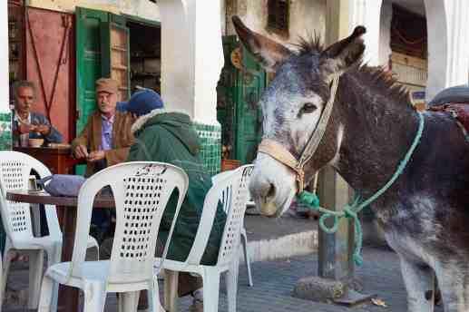 MBP_Morocco_20171101_5D11773-1440x960