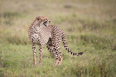 Tanzania Safari #3