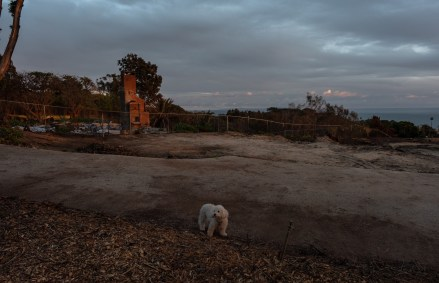 Valerie's dog Teddy, on the now empty property where they used to live.