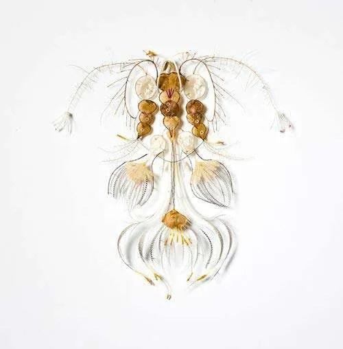 Shona Wilson, Artwork