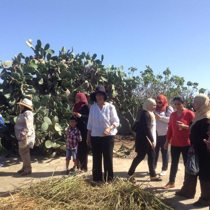 THM femmes semencières en Tunisie