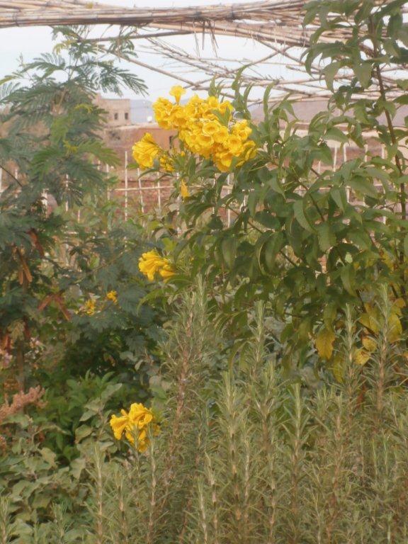 Promenade dans le jardin potager au CIPA