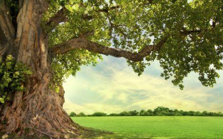 Semaine de l arbre THM