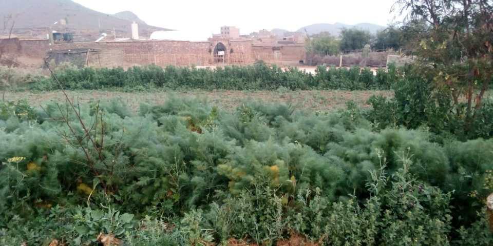 Une oasis verte en pleine zone aride CIPA-Pierre Rabhi