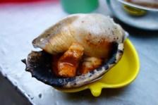 "big garlic snail ""oc toi"""