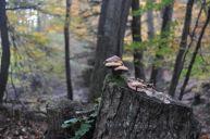 Eiswoog Pfälzerwald - 10
