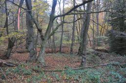 Eiswoog Pfälzerwald - 13