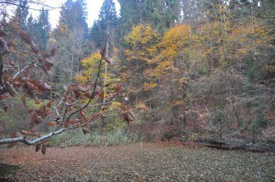Eiswoog Pfälzerwald - 15