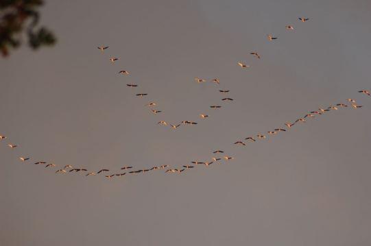 Pfälzerwald Vogelflug