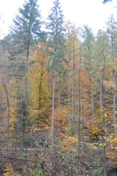 Eiswoog Pfälzerwald - 28