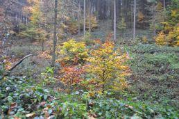 Eiswoog Pfälzerwald - 29
