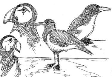 Faeroeer21-Papageitaucher-Lumme-Austernfischer
