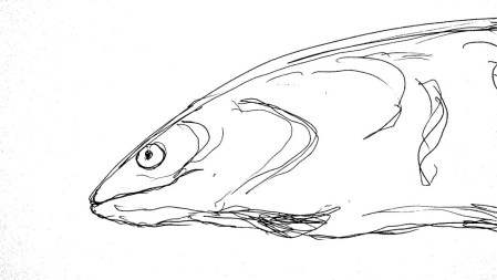 Fische Aal2