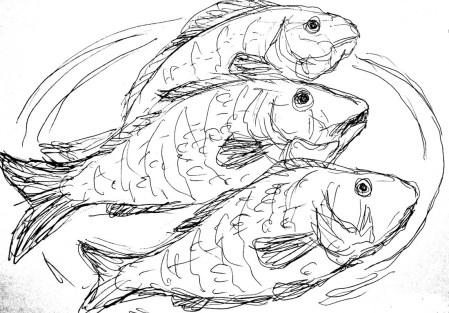 Fische Flussbarsche2