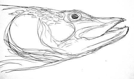 Fische Hecht4