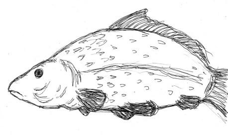 Fische Karpfen