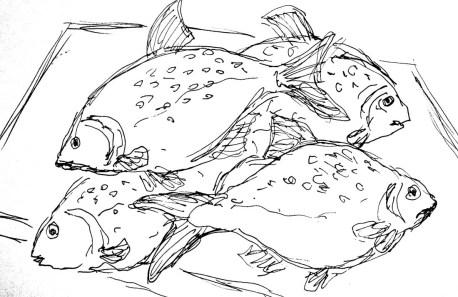 Fische Ploetzen