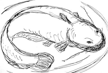 Fische Wels2