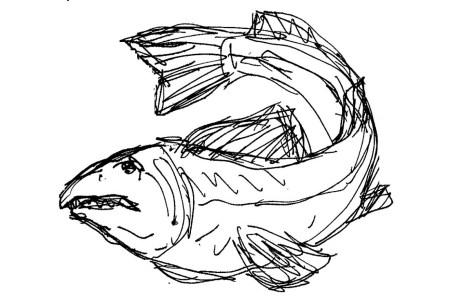 Fische Zander II