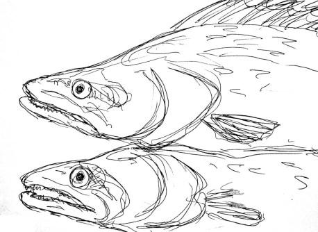 Fische Zander4