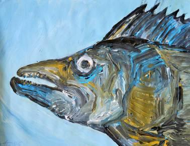 Fische21-Zander