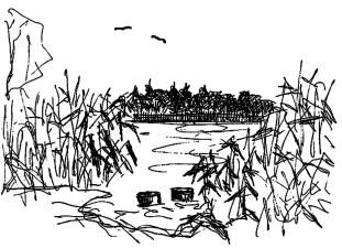 UckerSk3 Uckersee - Schilfrohrufer