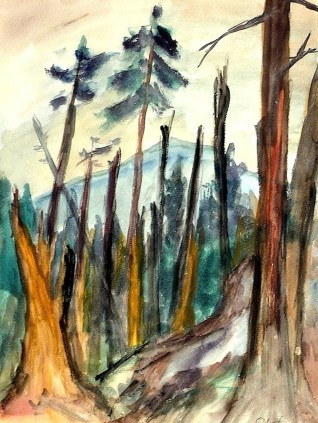 Windbruch im Hergeser Wald