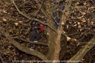 EInige Aktivisten sind aus Protest gegen die Räumung auf Bäume geklettert..