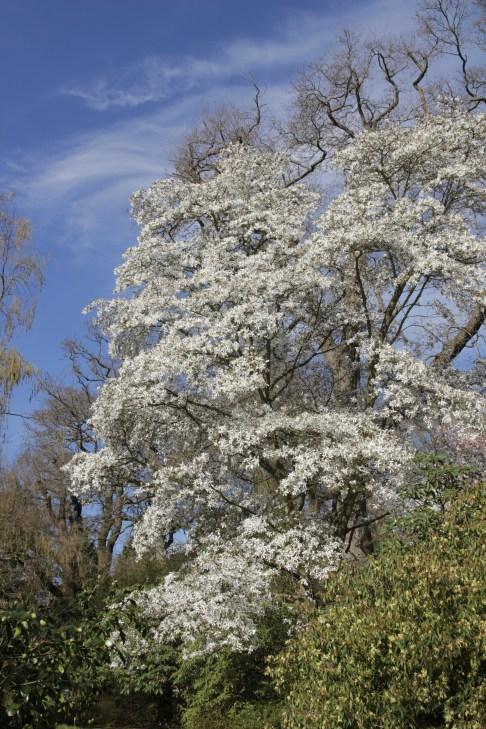 img 0537 Spring into April
