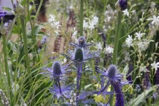 img 1450 Hampton Court Flower Show a world of flowers