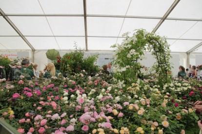 img 1493 Hampton Court Flower Show a world of flowers