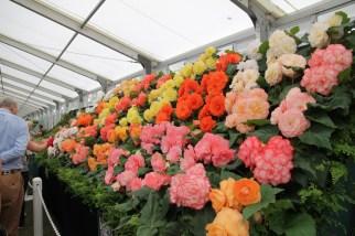 img 1552 Hampton Court Flower Show a world of flowers